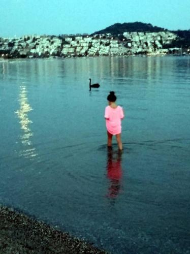 Bodrum sahilinde, bitkin halde görülen siyah kuğu, Türkiye'de bulunmayan cins olduğu belirlenince, tedaviye alınması için yakalanmaya çalışıldı. Kuğunun son görüldüğü bölgede, arama yapan AKUT ekibinin çalışmaları sonuçsuz kalınca, aramalar sonlandırıldı.