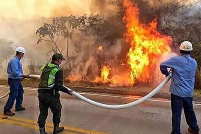 Günlerce söndürülemeyen yangında hayatını kaybeden hayvanlar yürekleri dağladı.