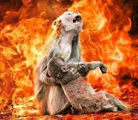 Amazon ormanlarındaki yangın, korkunç görüntülere sahne oldu.