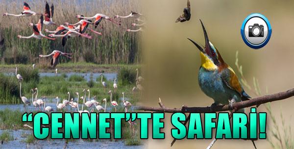 'Cennet'te Safari