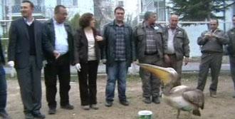 Mersin'de Yaralı Pelikan Tedaviye Alındı