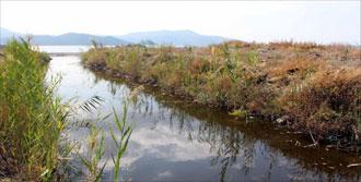 Fethiye'de Toplu Balık Ölümleri