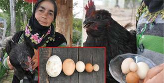 Gaz Bombası Tavukları da Etkilemiş