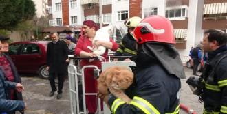 Mahsur Kadın Kedileriyle Kurtarıldı