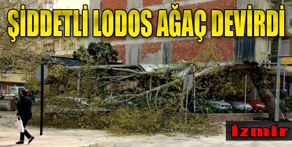Şiddetli Lodos İzmir'de Ağaç Devirdi
