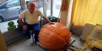 200 Kiloluk Bal Kabağı Yetiştirdi