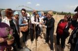 Urla tarımına alternatif ürün