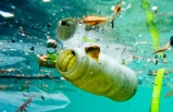 Deniz canlıları, plastik tehlikesiyle karşı karşıya
