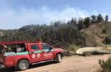 Piknik ateşi ormanı yaktı