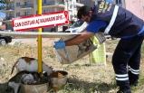 Buca Belediyesi, sokak hayvanlarına sahip çıktı