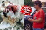 Vahşet, bu kez İzmir'de kendini gösterdi!