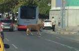 İzmir'de sığır, trafiği birbirine kattı!