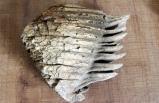 Yozgat'ta 8 milyon yıllık mamut kemiği ortaya çıktı!
