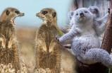 Pozlarıyla duygularımıza tercüman olan hayvanlar