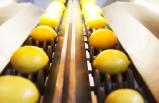Egeli ihracatçılardan tanıtım atağı: Yaş meyve sebze ihracatı 410 milyon doları aştı