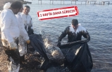 Foça'da temizlik çalışmaları devam ediyor