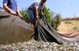 DSİ İzmir'den barajlara 2 milyon 750 bin yavru balık!
