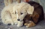 Hayvan hakları düzenlemesi!