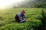 İzmir Büyükşehir Belediyesi'nin tarım desteği Ege'yi aştı!