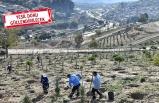 Kadifekale'de 'kent ormanı' seferberliği