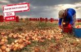 Soğan fiyatlarında artış katlanıyor: Önlem alınmazsa...
