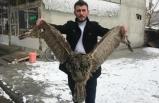 Erzurum'da şaşırtan görüntü!