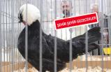İzmir'de kümes hayvanları yarışması