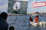 İzmir'de pelikan operasyonu