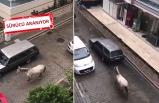 İzmir'de tepki çeken görüntü!