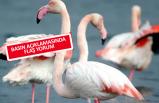Tarihi projede ÇED iptaline TMMOB yorumu: Flamingolar kazandı