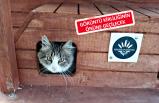 Karabağlar'da sokak kedilerine sıcak yuva