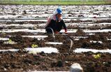 Mevsimlik tarım işçilerinin ücretleri yüzde 12,6 arttı