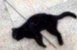 Urla'da kediyi okla vurdular!