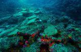 Antalya açıklarında 3500 yıllık batık!