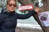 Kaplumbağasını bulana 1000 lira ödül verecek