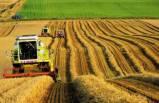 Türkiye, Belçika büyüklüğünde tarım alanını kaybetti
