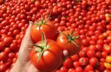 Türkiye domatesten 1 milyar dolar döviz hedefliyor