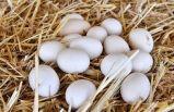 Yumurta üreticilerine vadeli mısır satışı