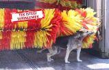 İzmir'de Fenomen Köpek Linda