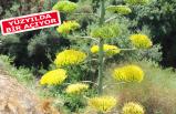 İzmir'in 'dünya mirası' çiçek açtı
