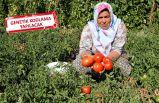 KArşıyaka'dan 'Yamanlar Domatesi' hamlesi
