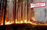 Orman yangınlarında korkunç iddialar