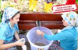 Buca'da hasat coşkusu: Bağlara davet var