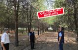 Ege Üniversitesi ormanı rehabilite ediliyor