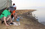 İzmir'de 176 flamingo yavrusu halkalandı
