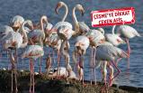 İzmir Kuş Cenneti, tatilcileri bekliyor