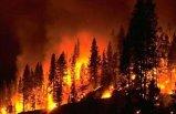 Bu yıl orman yangınlarında 5 bin 469 hektar alan zarar gördü