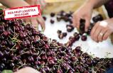 Çinlilerden kiraz ve siyah incire ilgi