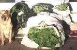 Dikili'de uyuşturucudan 5 kişiye gözaltı