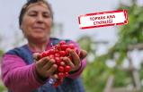 İzmir'in ürünlerini dünya tanıyacak